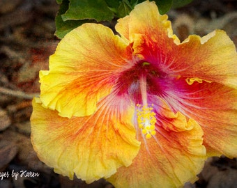 Yellow Flower Photography, Fine Art Photography - Hibiscus