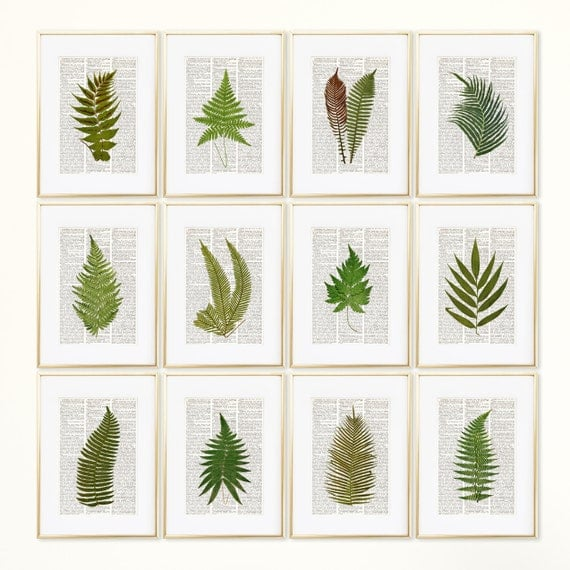Ferns dictionary art print set botanical prints fern print - Cuadros posters laminas ...
