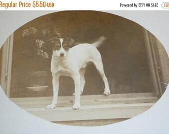 on sale Cute Jack Russell Terrier Unused RPPC