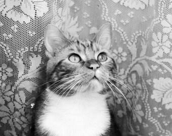 Oh dear cat
