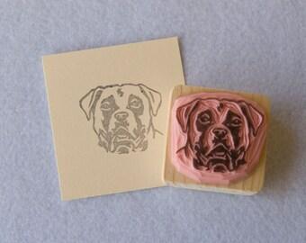 Ref 86. Boxer dog portrait / Portrait de chien boxer