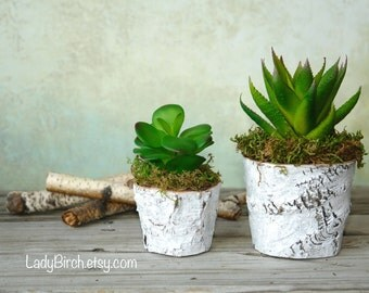 succulent planters thank you gift wood vases wood boxes for centerpieces reception planter rustic chic wedding birch bark  wood boxes