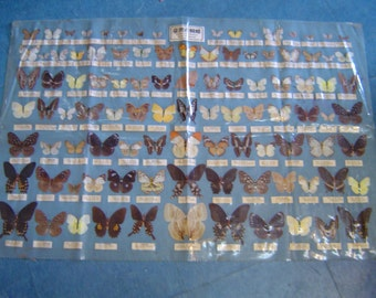 Vintage Taiwan Butterfly Wing specimen Collection