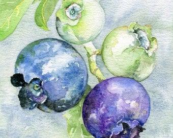 Blueberry Art Print Watercolour Painting Kitchen Decor Fruit Art Purple Blue Home