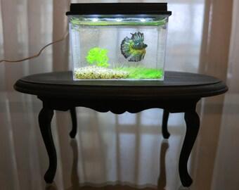 Miniature betta fish aquarium