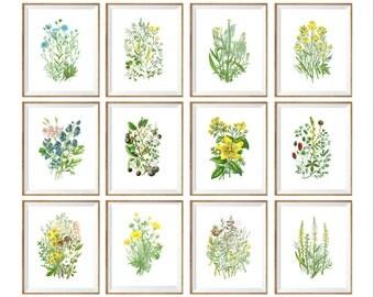 Wild Flowers Art Print SET of 12. wild flower prints, flower chart, floral art set, botanical prints set, flower variety, flora prints, 8x10