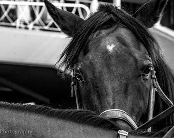 Santa Anita Horses