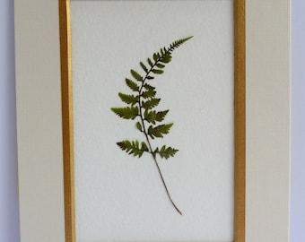 Real Pressed Fern Botanical Art Herbarium of Japanese Painted Fern 5x7