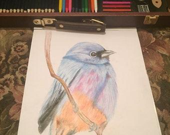 Custom Bird Drawings