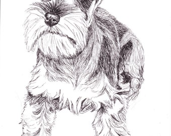 Schnauzer print of an original pen drawing by Tracy Stone