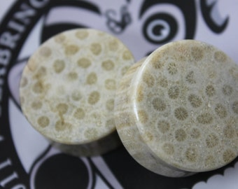 Indonesian Fossil Coral Plugs