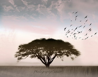 The solitary Acacia Photography, Landscape, Lonely tree, South Africa, birds, pastels, bright sky, Fine Art Print, Minimalist.
