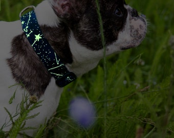Glowing in the dark Stars dog collar - from S (from chihuahua to small dogs) to L (from big to giant dog)