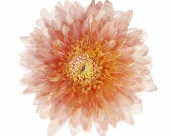Peach Coloured Flower