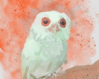 Albino owl postcard print of original watercolor