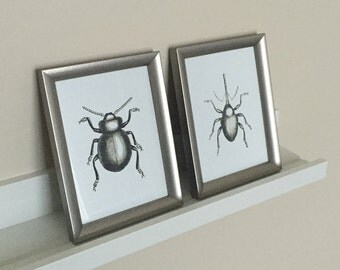 "Cool Wall Decor - Pair of 5 x 7"" Engraved Insects w/ Frames - Gift Ideas"