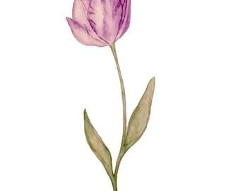 Tulip - Print