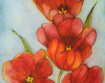 Tulip Congregation