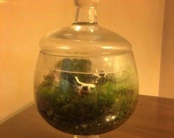 Moss Terrarium with miniature grazing cows