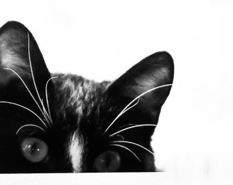 Peek a boo! Black and White Pet Photography, Cat Photography, Animal Photography