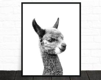 Alpaca Print, Black and White Nursery Decor, Alpaca Art, Llama Print, Animal Print, Kids Printable, Black and White Animal Prints, Poster