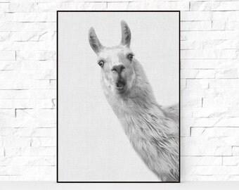Alpaca Print, Nursery Animal Decor Wall Art, Alpaca Photo, Large Printable Poster, Digital Download, Modern Minimalist, Black and White