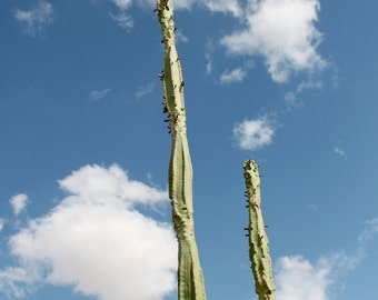 Cactus Sky Photo