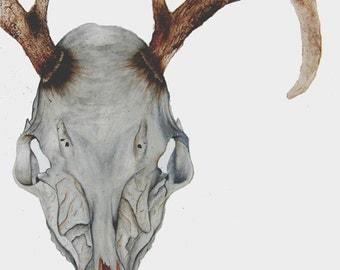 Skeleton - Original Watercolor Deer Painting, 28in x 18in