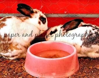 8x10 bunny love photograph
