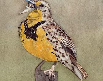 MeadowLark Watercolour Print