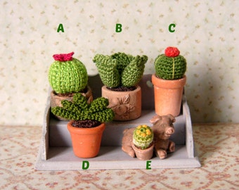 Muffa's - Micro Miniature Cactus Plant