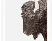 Roam - Buffalo watercolor illustration. Beautifully textured cotton canvas art print. Order as a 5x7 8x10 11x14 or 16x20 size.