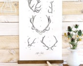 ON SALE Antler Study Vol.1 - large wall hanging, wood trim and printed on textured cotton canvas. Vintage Science Posters
