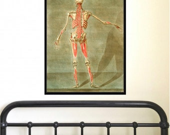 Anatomical Study of Human Body (back) antique reproduction print giclee print anatomy print anatomy art vintage anatomy antique anatomy