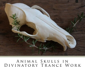 Skull Scrying: Animal Skulls in Divinatory Trance PAPERBACK book signed by Lupa divination pagan fortune telling
