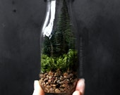 Milk Bottle Terrarium with Miniature Pine Trees