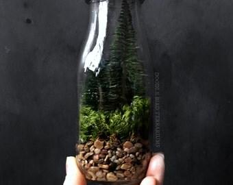 Milk Bottle Terrarium with Miniature Pine Trees