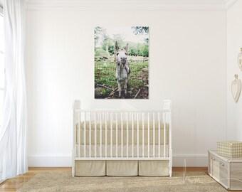 donkey photograph farm animal print boy girl nursery colorful playroom large wall art rustic home decor