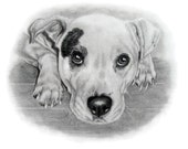 Custom Dog Portrait Pet Art Sketch Pet Lover Gift Idea 8x10