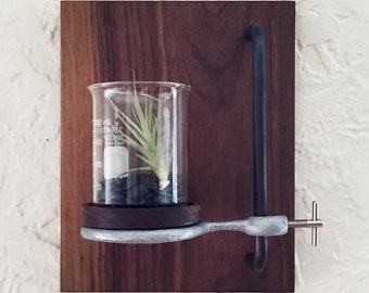 Walnut & Glass Beaker Wall Display