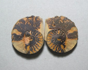 fossil pyritized AMMONITE cabochons matching pair two 32X38mm designer cabs