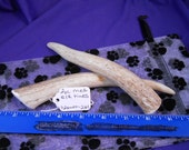 2 Piece Medium Elk Tines Deer Antler Dog Chews for Moderate Chewers, F2pmet-261
