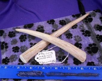 2 Piece LONG Medium Whitetail Deer Antler Dog Chews for Moderate Chewers ,F2plmwt-282