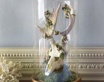 Animal Skull Display Moose Elk Skull in Bell Jar Glass Dome Cloche Taxidermy Assemblage Art