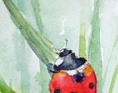 "UPHILL CLIMB Original ACEO Ladybug watercolor 2.5"" X 3.5"""