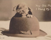Any Old Place I Hang My Hat- 1900s Antique Photograph- Cute Puppy Dog- Bowler Hat- Edwardian- Real Photo Postcard- RPPC- Paper Ephemera