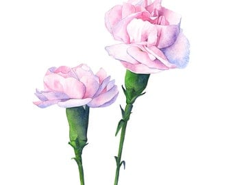 Carnation print of watercolour painting, C12016, A3 size print, carnation watercolor painting, pink carnation painting, botanical wall art