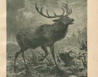 1889 Vintage Print The Red Deer,  Black and White Engraving