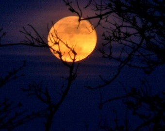 Spring Equinox Super-moon, Golden Full Moon behind trees, twilight night sky, moonrise, elder & ash trees, lunar photography, orange moon