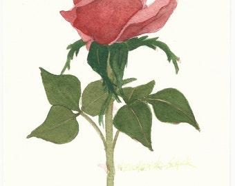 Red Rose 5 x 7  Original Watercolor